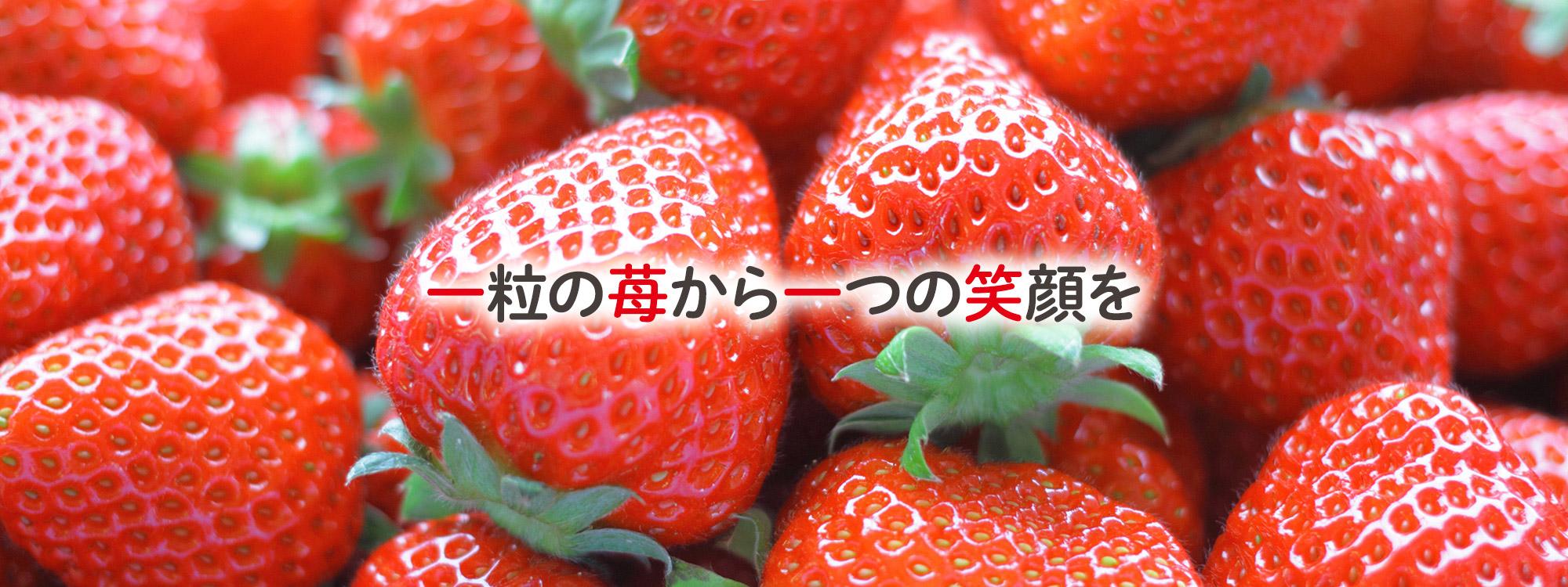一粒の苺から一つの笑顔を